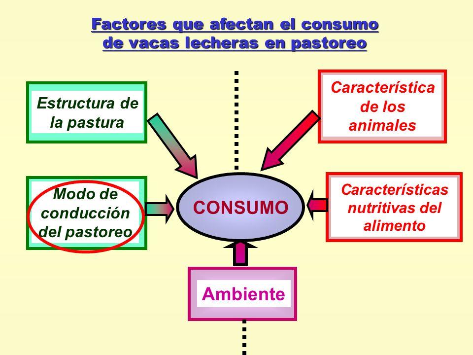 Factores que afectan el consumo de vacas lecheras en pastoreo CONSUMO Ambiente Características nutritivas del alimento Característica de los animales