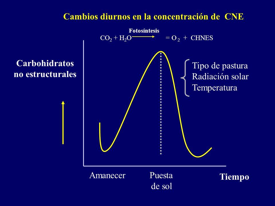 Amanecer Puesta de sol Carbohidratos no estructurales Tiempo Cambios diurnos en la concentración de CNE Tipo de pastura Radiación solar Temperatura CO