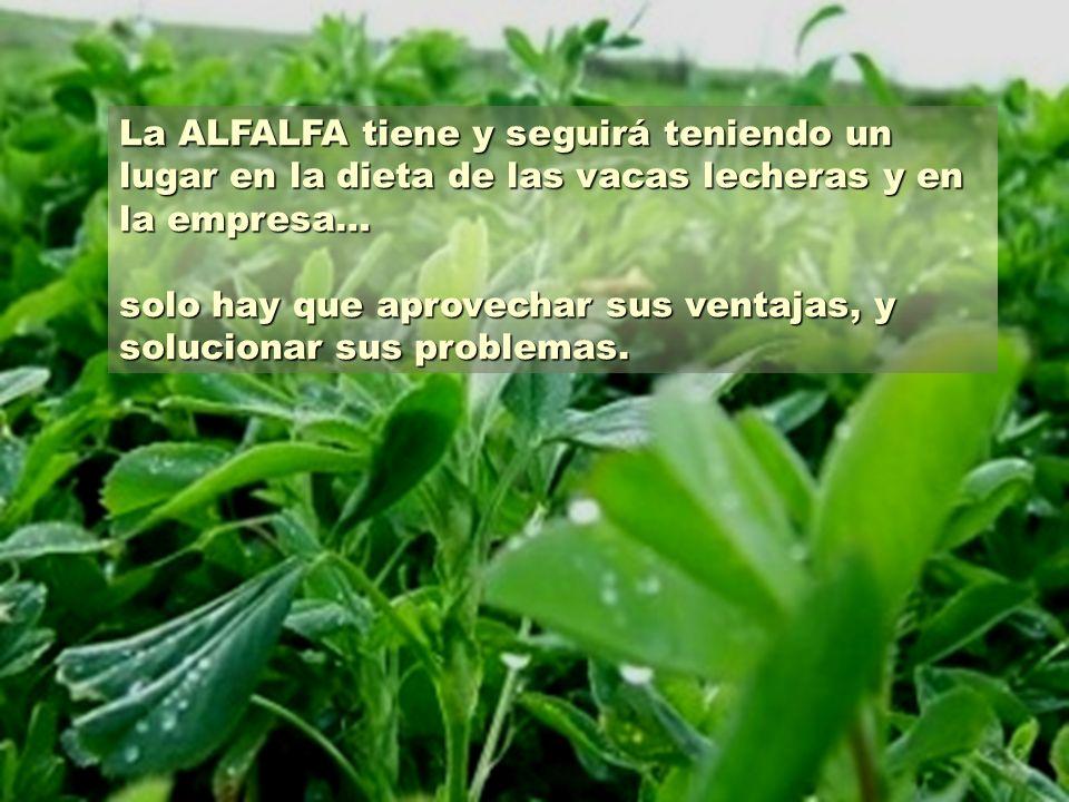 La ALFALFA tiene y seguirá teniendo un lugar en la dieta de las vacas lecheras y en la empresa… solo hay que aprovechar sus ventajas, y solucionar sus