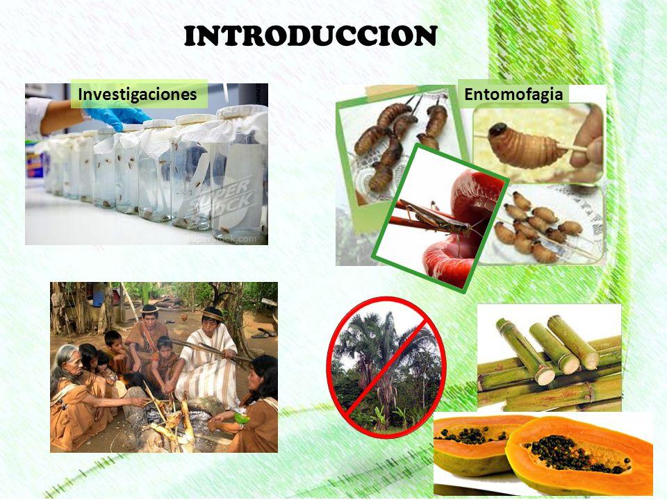 BIOLOGÍA Oviposición 2 mm y 0,8 mg González y Camino (1974).