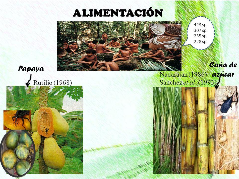ALIMENTACIÓN Papaya Caña de azúcar 443 sp. 307 sp. 235 sp. 228 sp. Rutilio (1968) Nadarajan (1986) Sánchez et al. (1993)