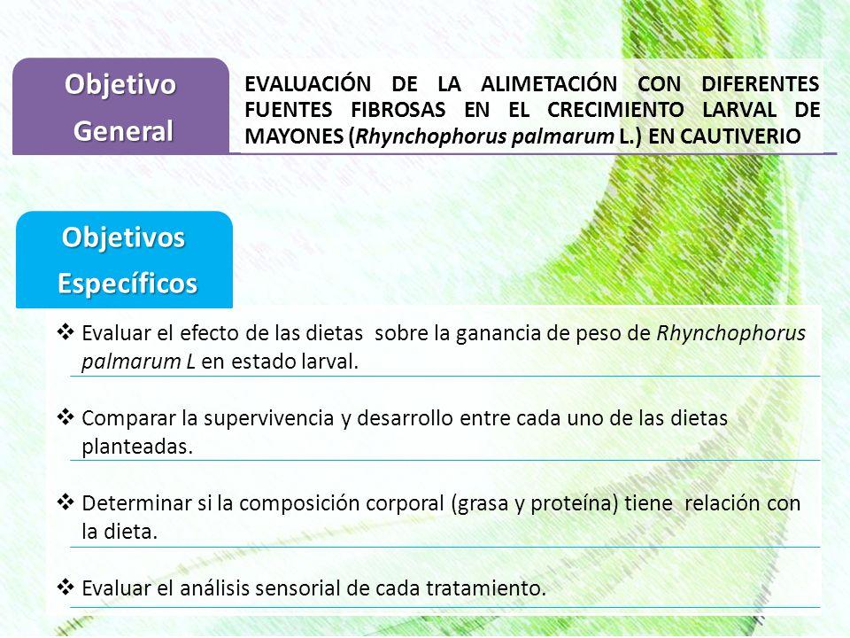 EVALUACIÓN DE LA ALIMETACIÓN CON DIFERENTES FUENTES FIBROSAS EN EL CRECIMIENTO LARVAL DE MAYONES (Rhynchophorus palmarum L.) EN CAUTIVERIOObjetivo Gen