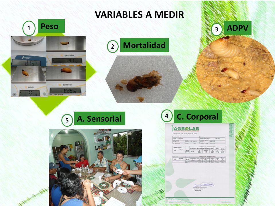 VARIABLES A MEDIR Peso 1 Mortalidad 2 ADPV 3 C. Corporal 4 A. Sensorial 5