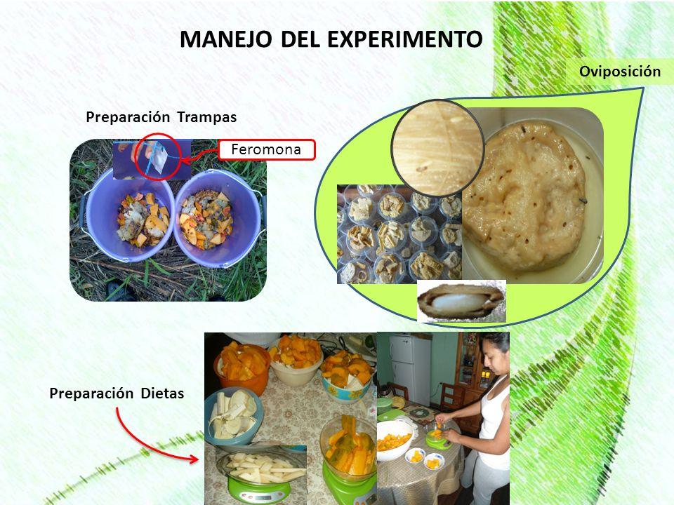 CONCLUSIONES Las materias primas papaya y caña de azúcar tuvieron un efecto positivo, en las variables ganancia de peso y porcentaje grasa - proteína.