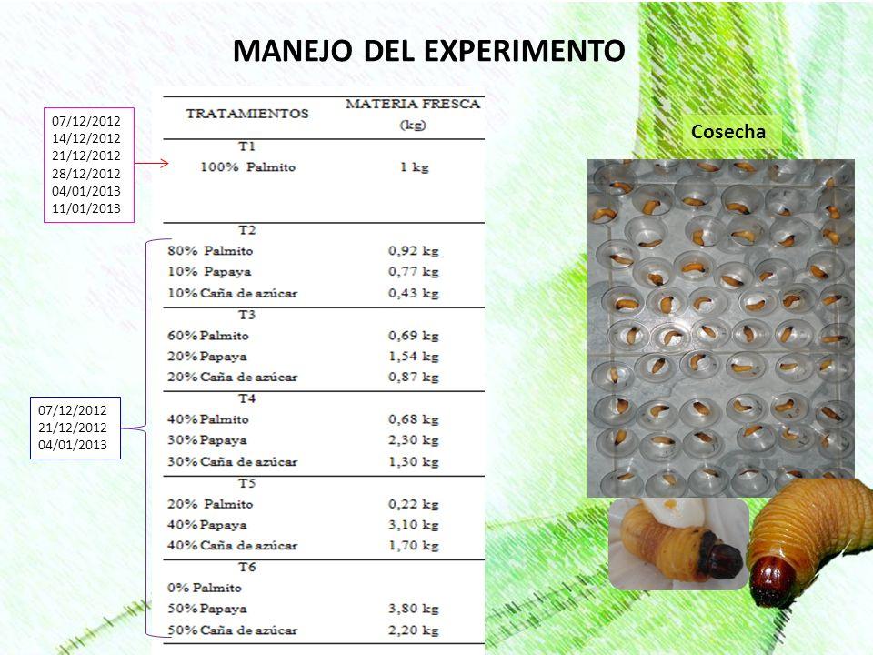 MANEJO DEL EXPERIMENTO Cosecha 07/12/2012 14/12/2012 21/12/2012 28/12/2012 04/01/2013 11/01/2013 07/12/2012 21/12/2012 04/01/2013
