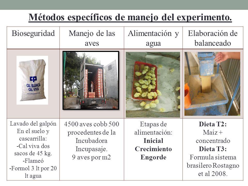 Métodos específicos de manejo del experimento. BioseguridadManejo de las aves Alimentación y agua Elaboración de balanceado Lavado del galpón En el su