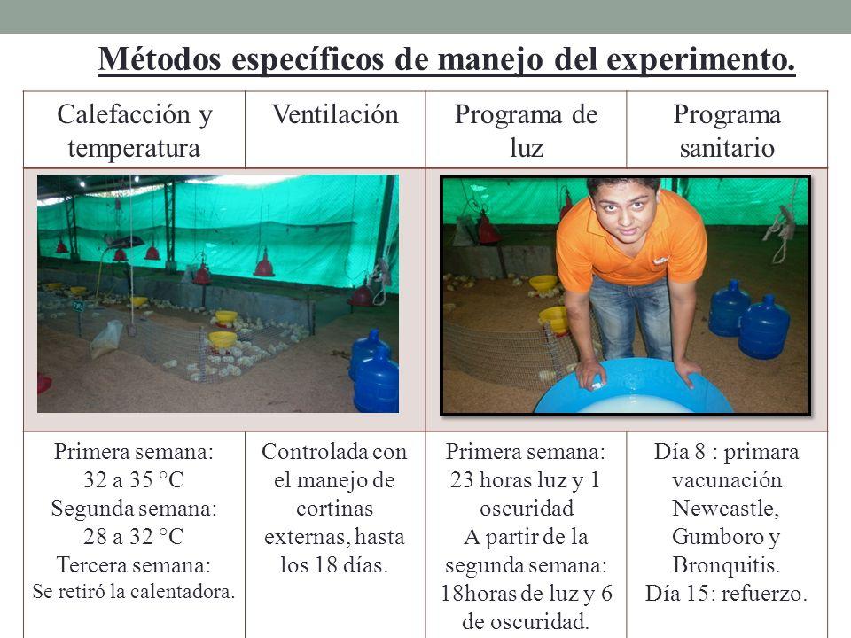 Métodos específicos de manejo del experimento. Calefacción y temperatura VentilaciónPrograma de luz Programa sanitario Primera semana: 32 a 35 °C Segu