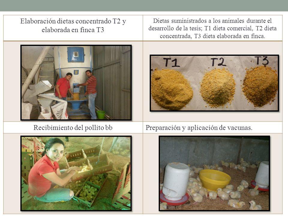 Elaboración dietas concentrado T2 y elaborada en finca T3 Dietas suministrados a los animales durante el desarrollo de la tesis; T1 dieta comercial, T