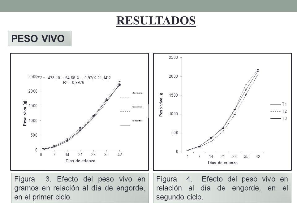 RESULTADOS PESO VIVO Figura 3. Efecto del peso vivo en gramos en relación al día de engorde, en el primer ciclo. Figura 4. Efecto del peso vivo en rel