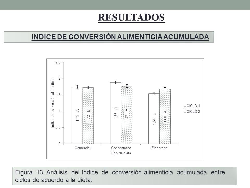 RESULTADOS INDICE DE CONVERSIÓN ALIMENTICIA ACUMULADA Figura 13. Análisis del índice de conversión alimenticia acumulada entre ciclos de acuerdo a la