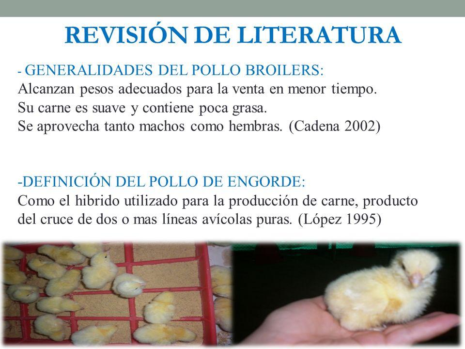 REVISIÓN DE LITERATURA - GENERALIDADES DEL POLLO BROILERS: Alcanzan pesos adecuados para la venta en menor tiempo. Su carne es suave y contiene poca g