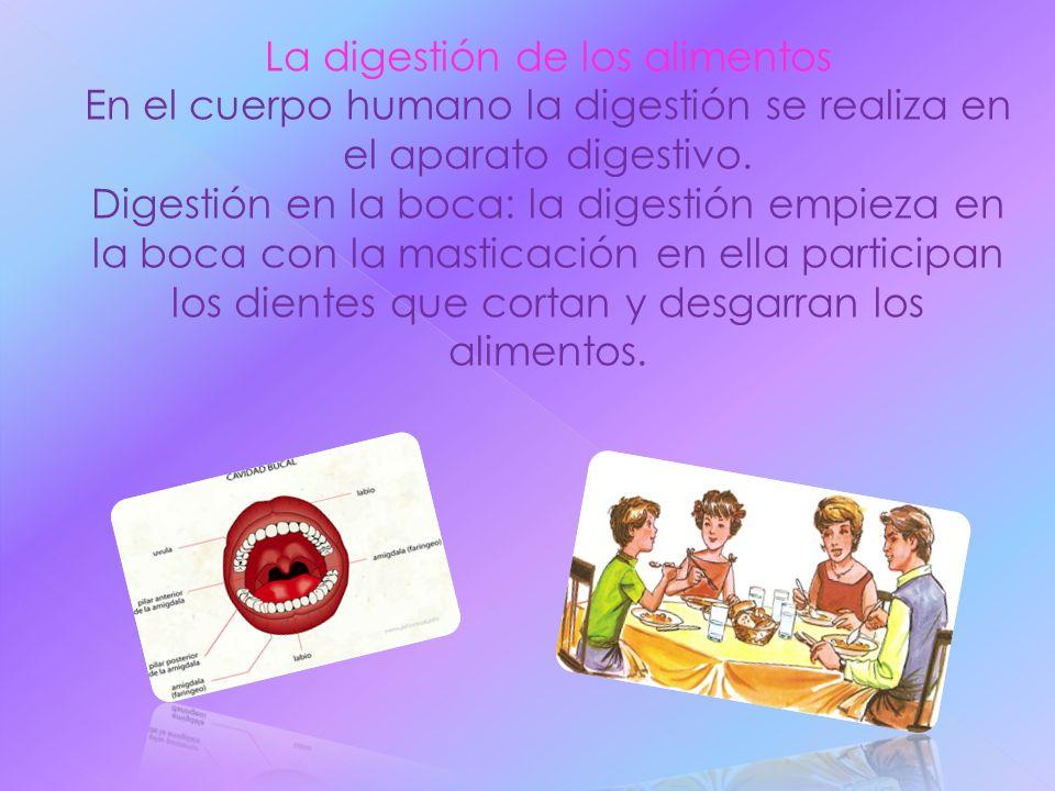 La digestión de los alimentos En el cuerpo humano la digestión se realiza en el aparato digestivo. Digestión en la boca: la digestión empieza en la bo