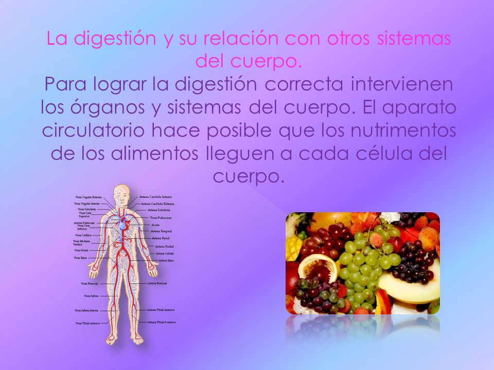 La digestión y su relación con otros sistemas del cuerpo. Para lograr la digestión correcta intervienen los órganos y sistemas del cuerpo. El aparato