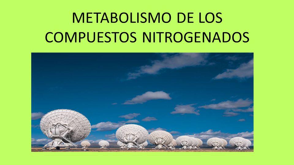 METABOLISMO DE LOS COMPUESTOS NITROGENADOS