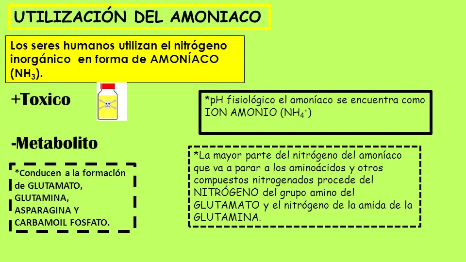 UTILIZACIÓN DEL AMONIACO Los seres humanos utilizan el nitrógeno inorgánico en forma de AMONÍACO (NH 3 ). +Toxico -Metabolito *pH fisiológico el amoní