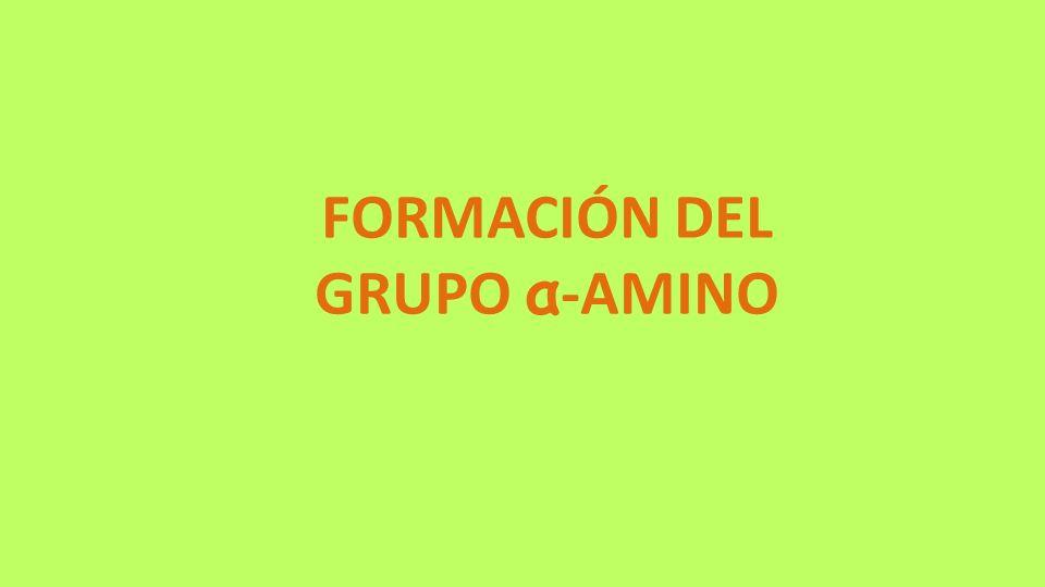 FORMACIÓN DEL GRUPO α -AMINO
