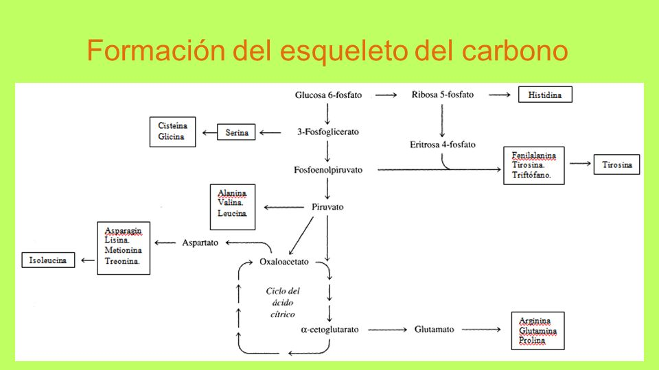 Formación del esqueleto del carbono