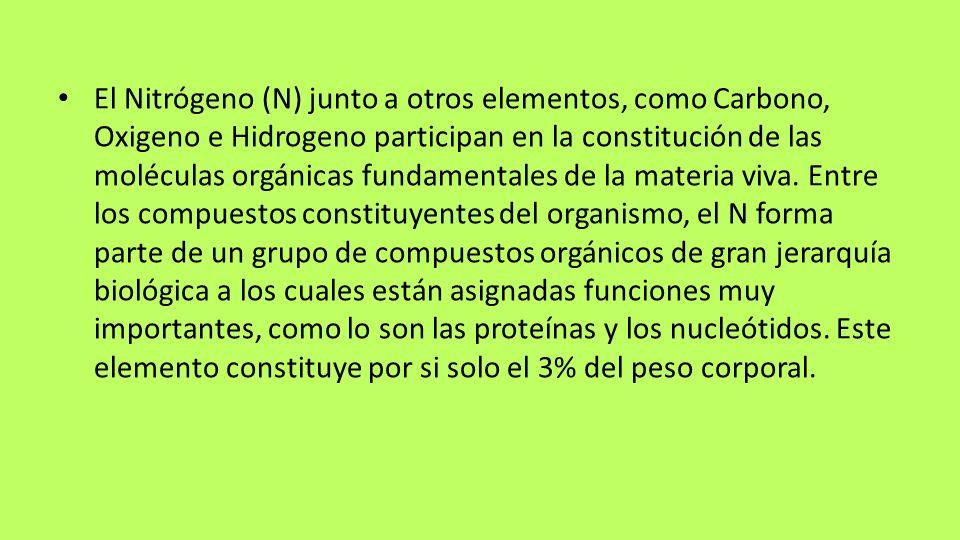 El Nitrógeno (N) junto a otros elementos, como Carbono, Oxigeno e Hidrogeno participan en la constitución de las moléculas orgánicas fundamentales de