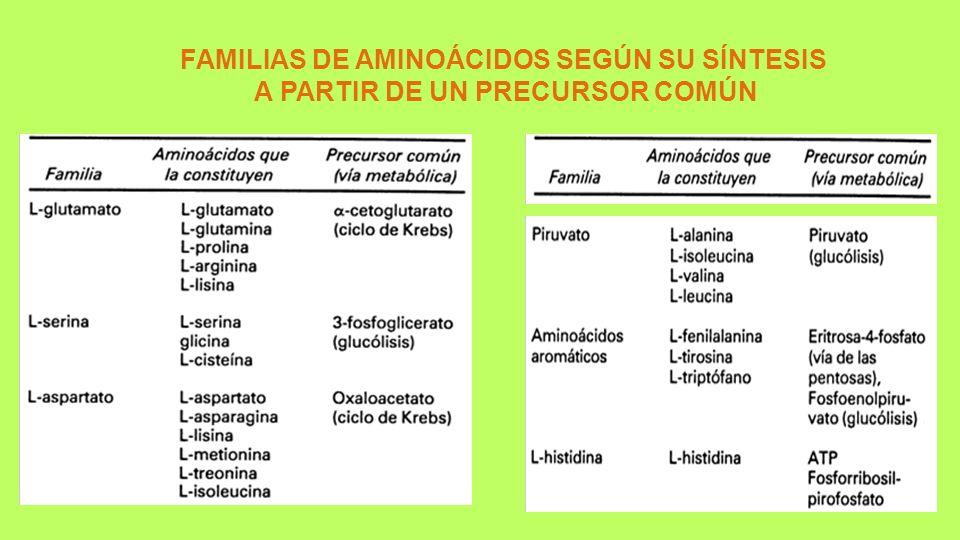 FAMILIAS DE AMINOÁCIDOS SEGÚN SU SÍNTESIS A PARTIR DE UN PRECURSOR COMÚN
