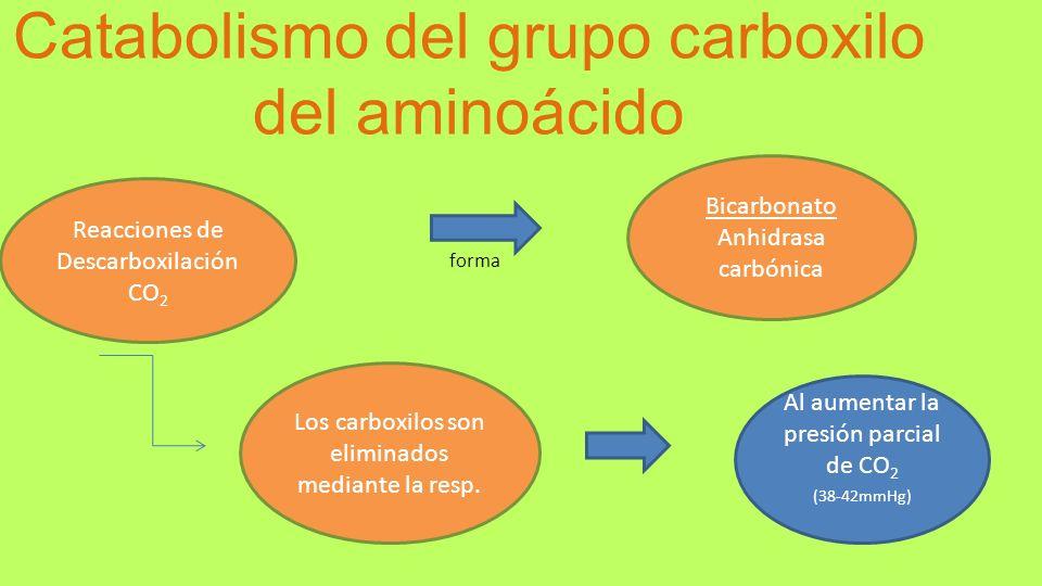 Catabolismo del grupo carboxilo del aminoácido Reacciones de Descarboxilación CO 2 Bicarbonato Anhidrasa carbónica Los carboxilos son eliminados media
