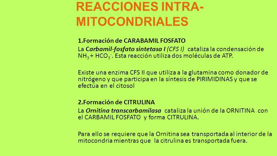 REACCIONES INTRA- MITOCONDRIALES 1.Formación de CARABAMIL FOSFATO La Carbamil-fosfato sintetasa I (CFS I) cataliza la condensación de NH 3 + HCO 3 -.