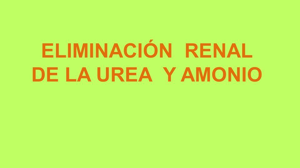 ELIMINACIÓN RENAL DE LA UREA Y AMONIO