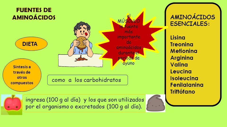 DIETA Sintesis a través de otros compuestos AMINOÁCIDOS ESENCIALES: Lisina Treonina Metionina Arginina Valina Leucina Isoleucina Fenilalanina Triftófa