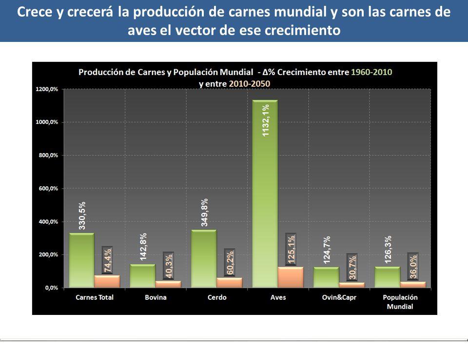 Crece y crecerá la producción de carnes mundial y son las carnes de aves el vector de ese crecimiento