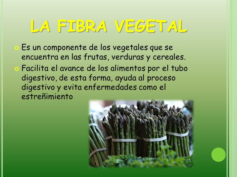 LA FIBRA VEGETAL Es un componente de los vegetales que se encuentra en las frutas, verduras y cereales. Facilita el avance de los alimentos por el tub