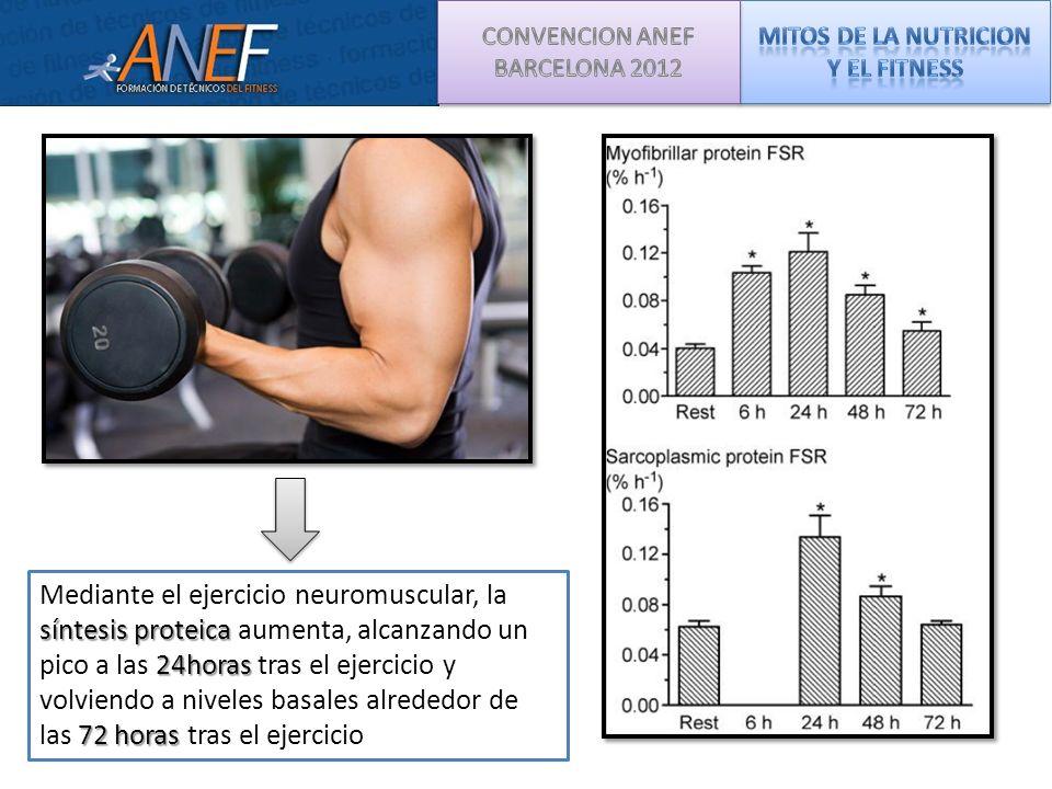 síntesis proteica 24horas 72 horas Mediante el ejercicio neuromuscular, la síntesis proteica aumenta, alcanzando un pico a las 24horas tras el ejercic