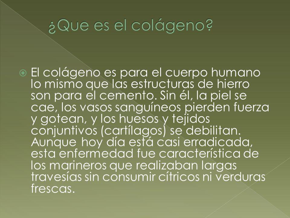 El colágeno es para el cuerpo humano lo mismo que las estructuras de hierro son para el cemento. Sin él, la piel se cae, los vasos sanguíneos pierden