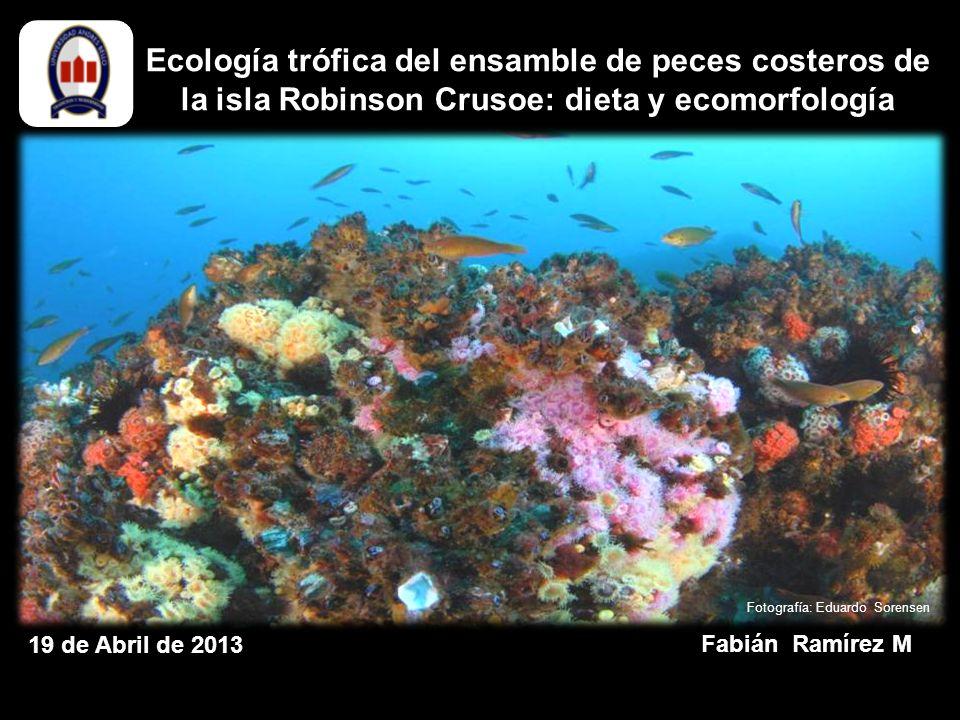 Ecología trófica del ensamble de peces costeros de la isla Robinson Crusoe: dieta y ecomorfología Fabián Ramírez M 19 de Abril de 2013 Fotografía: Eduardo Sorensen