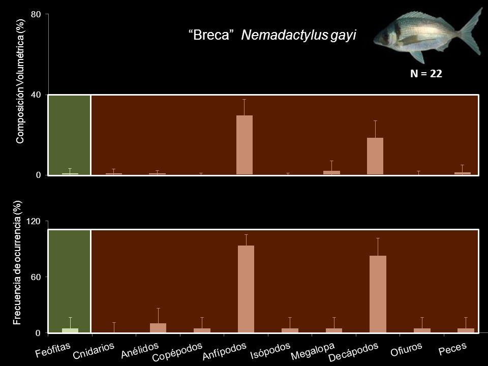Breca Nemadactylus gayi N = 22
