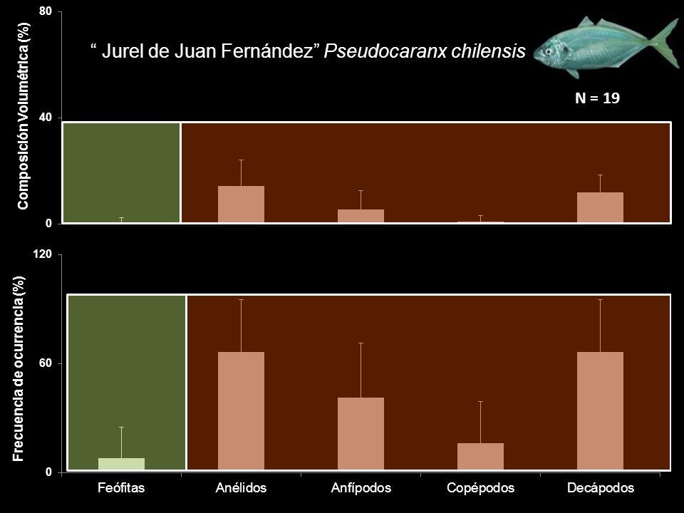 Jurel de Juan Fernández Pseudocaranx chilensis N = 19