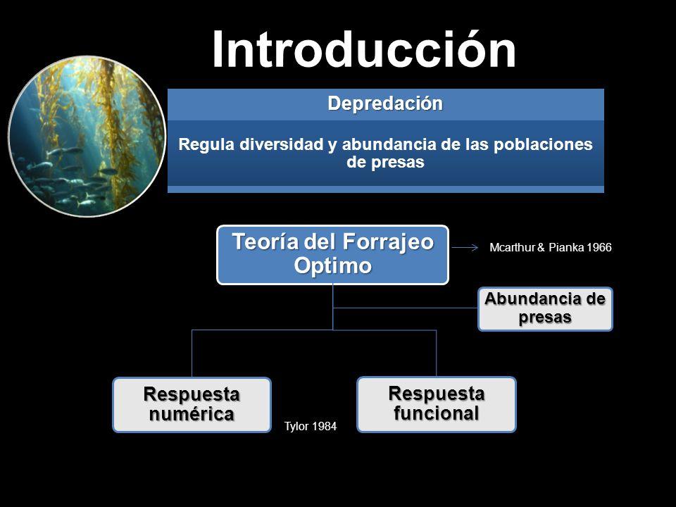 IntroducciónDepredación Regula diversidad y abundancia de las poblaciones de presas Respuesta numérica Respuesta funcional Teoría del Forrajeo Optimo Abundancia de presas Mcarthur & Pianka 1966 Tylor 1984