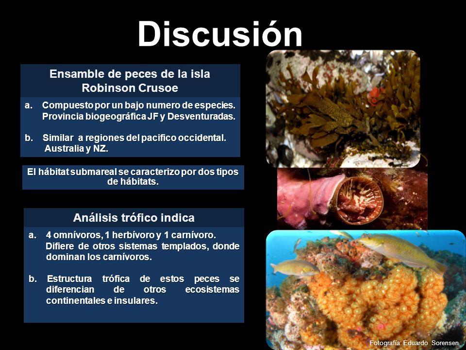 Discusión El hábitat submareal se caracterizo por dos tipos de hábitats. Fotografía: Eduardo Sorensen a.Compuesto por un bajo numero de especies. Prov