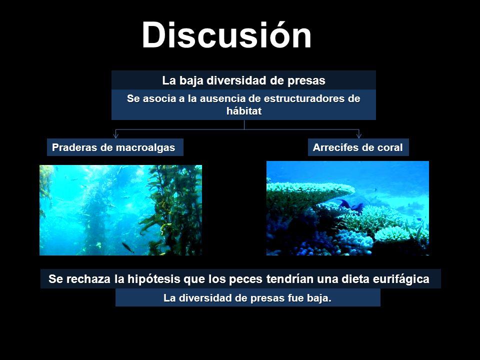 Se rechaza la hipótesis que los peces tendrían una dieta eurifágica Se rechaza la hipótesis que los peces tendrían una dieta eurifágica Praderas de macroalgas Arrecifes de coral La baja diversidad de presas Se asocia a la ausencia de estructuradores de hábitat Discusión La diversidad de presas fue baja.