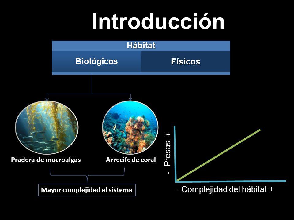 Introducción - Presas + - Complejidad del hábitat +Hábitat BiológicosFísicos Mayor complejidad al sistema Pradera de macroalgasArrecife de coral