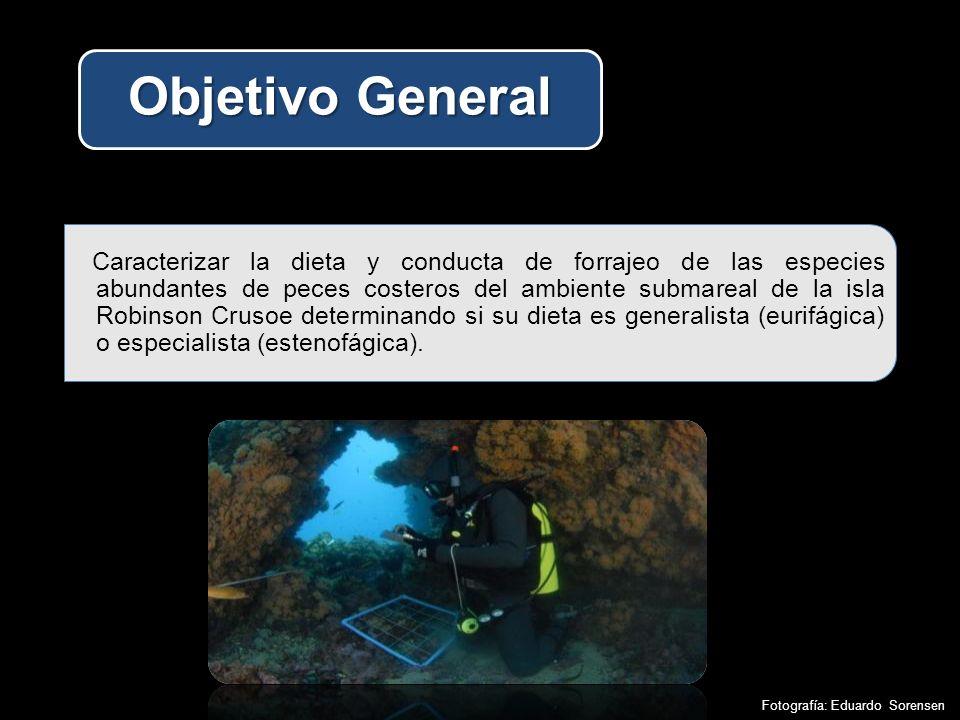 Caracterizar la dieta y conducta de forrajeo de las especies abundantes de peces costeros del ambiente submareal de la isla Robinson Crusoe determinando si su dieta es generalista (eurifágica) o especialista (estenofágica).