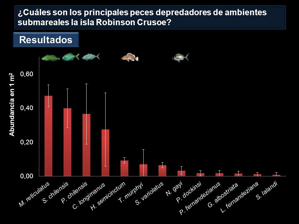 ¿Cuáles son los principales peces depredadores de ambientes submareales la isla Robinson Crusoe.