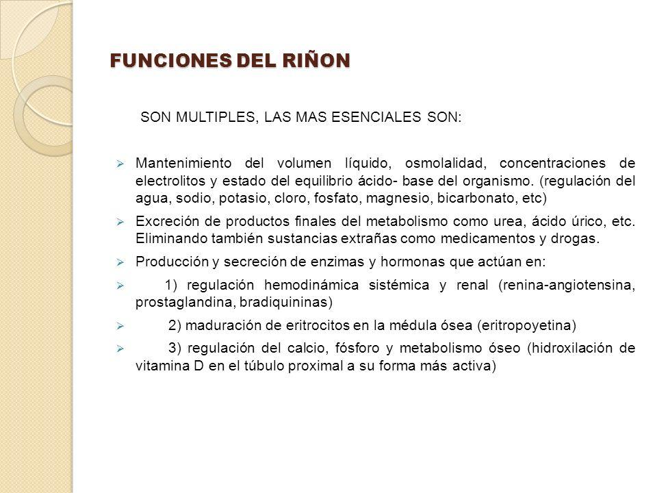 FUNCIONES DEL RIÑON SON MULTIPLES, LAS MAS ESENCIALES SON: Mantenimiento del volumen líquido, osmolalidad, concentraciones de electrolitos y estado de
