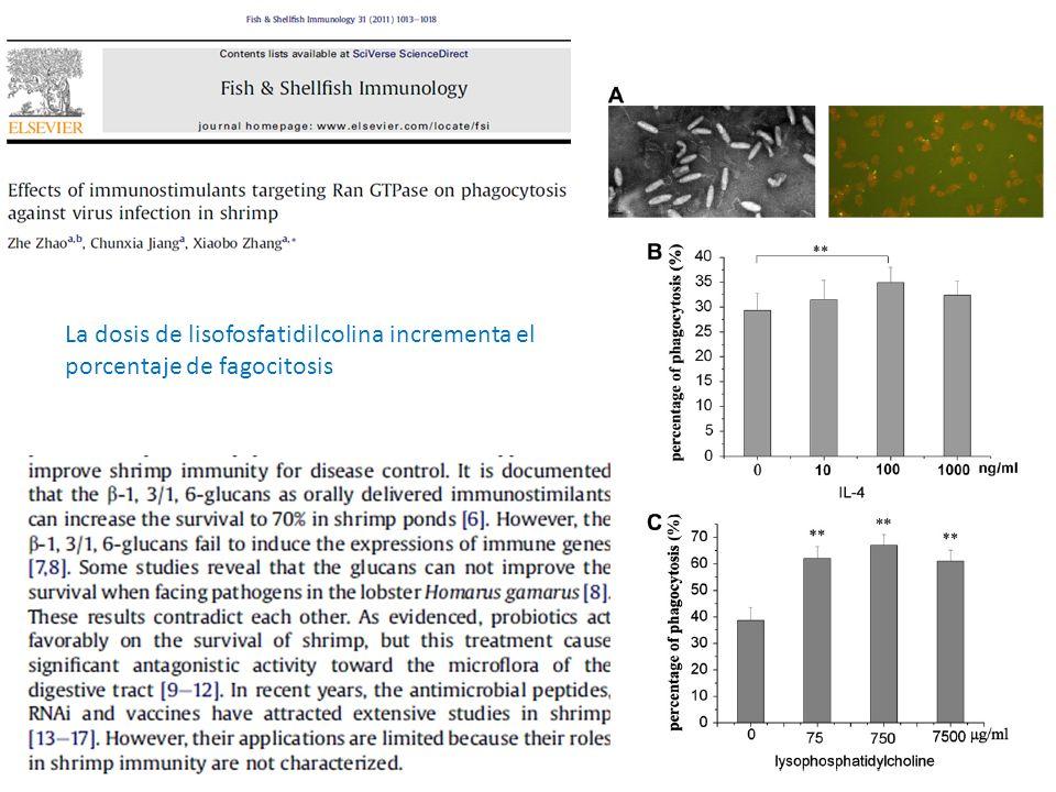 La dosis de lisofosfatidilcolina incrementa el porcentaje de fagocitosis