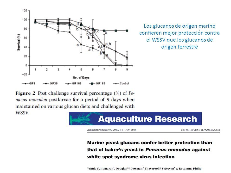 Los glucanos de origen marino confieren mejor protección contra el WSSV que los glucanos de origen terrestre