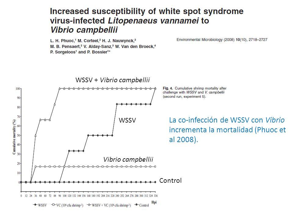 WSSV + Vibrio campbellii WSSV Vibrio campbellii Control La co-infección de WSSV con Vibrio incrementa la mortalidad (Phuoc et al 2008).