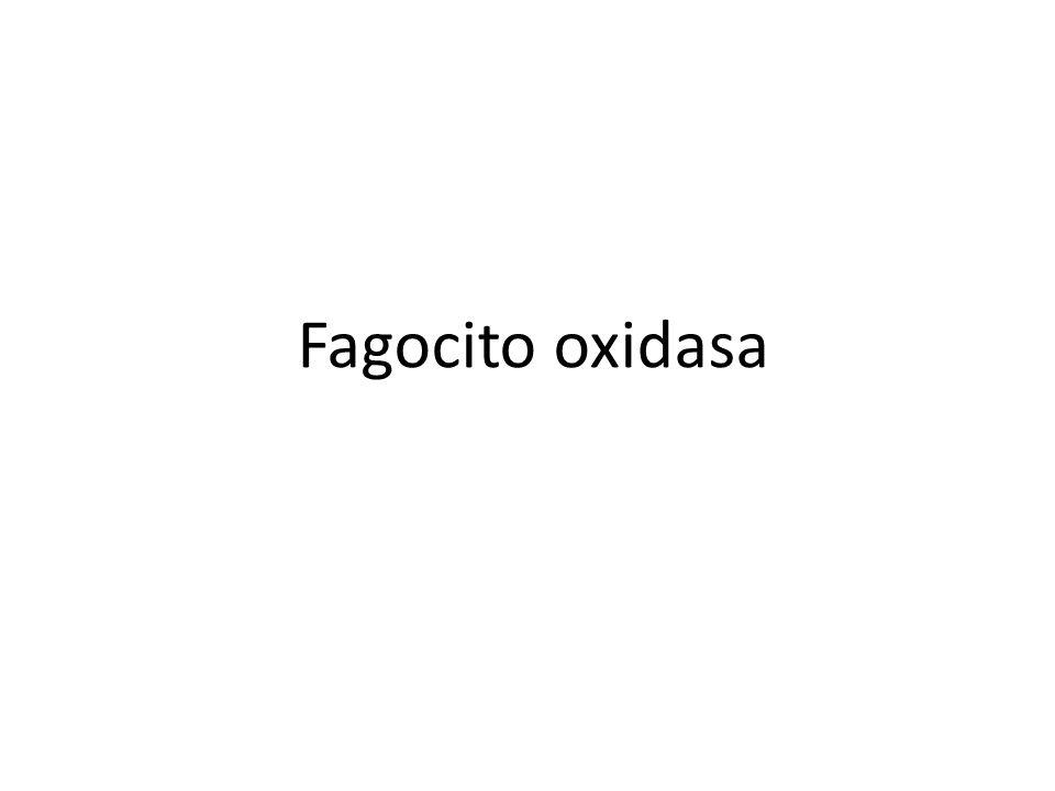 Fagocito oxidasa