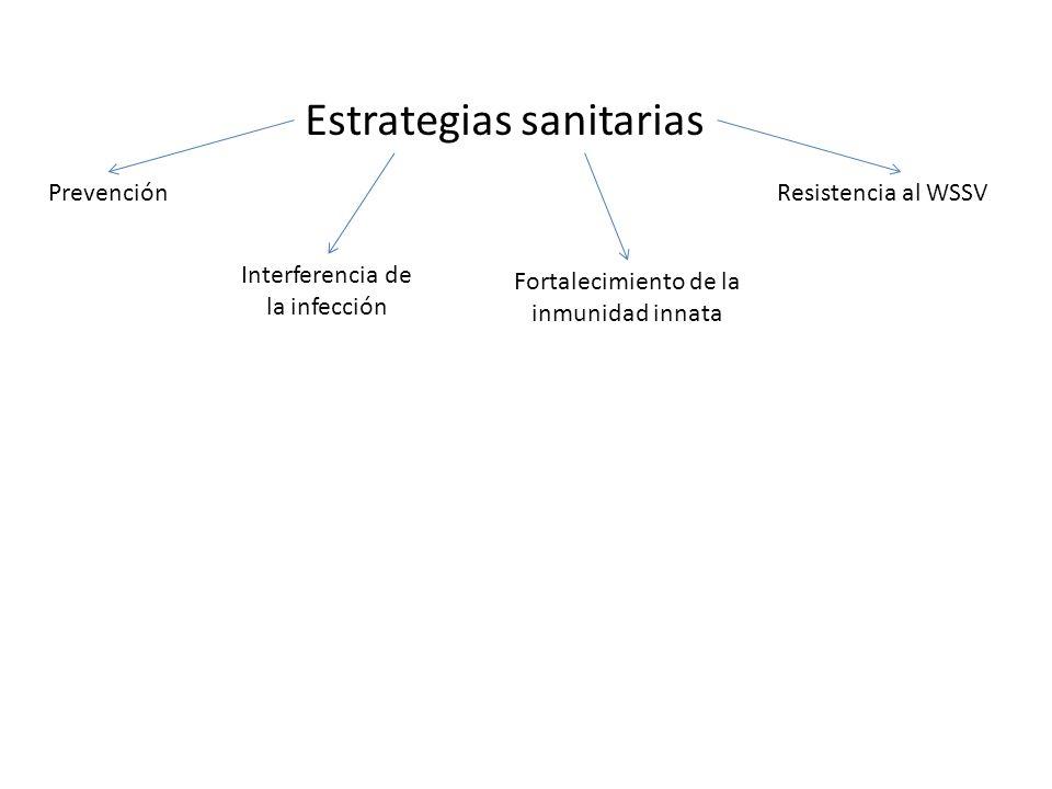 Estrategias sanitarias Prevención Interferencia de la infección Fortalecimiento de la inmunidad innata Resistencia al WSSV