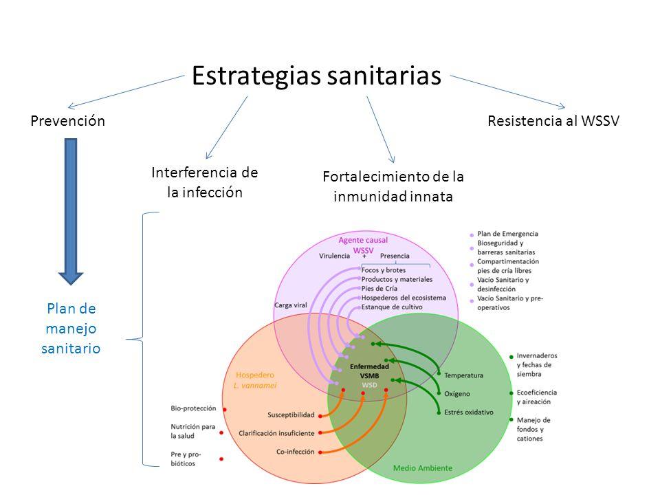 Estrategias sanitarias Prevención Interferencia de la infección Fortalecimiento de la inmunidad innata Resistencia al WSSV Plan de manejo sanitario