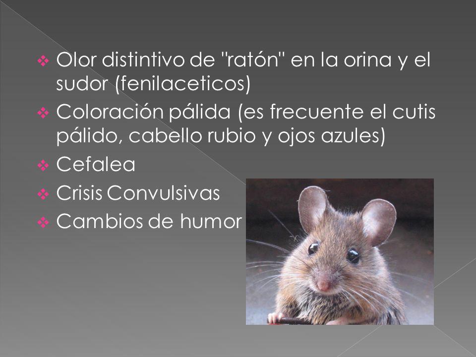 Olor distintivo de ratón en la orina y el sudor (fenilaceticos) Coloración pálida (es frecuente el cutis pálido, cabello rubio y ojos azules) Cefalea Crisis Convulsivas Cambios de humor