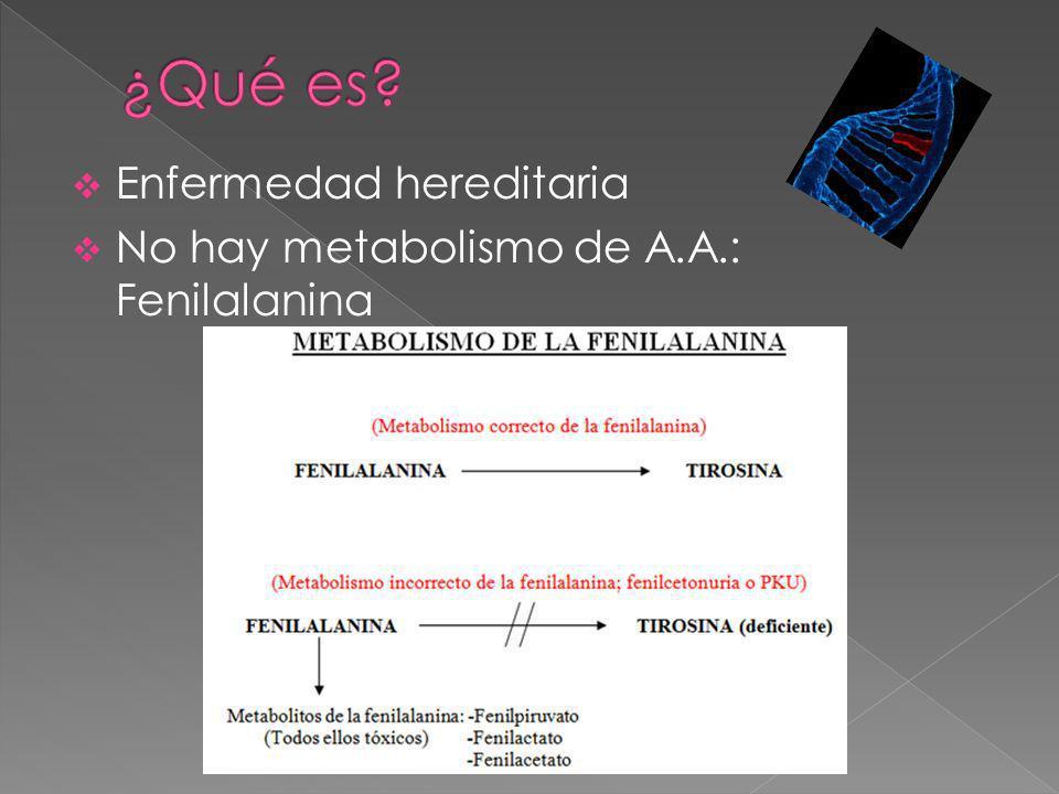 Enfermedad hereditaria No hay metabolismo de A.A.: Fenilalanina