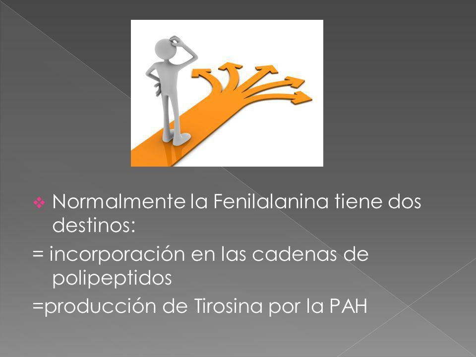 Normalmente la Fenilalanina tiene dos destinos: = incorporación en las cadenas de polipeptidos =producción de Tirosina por la PAH
